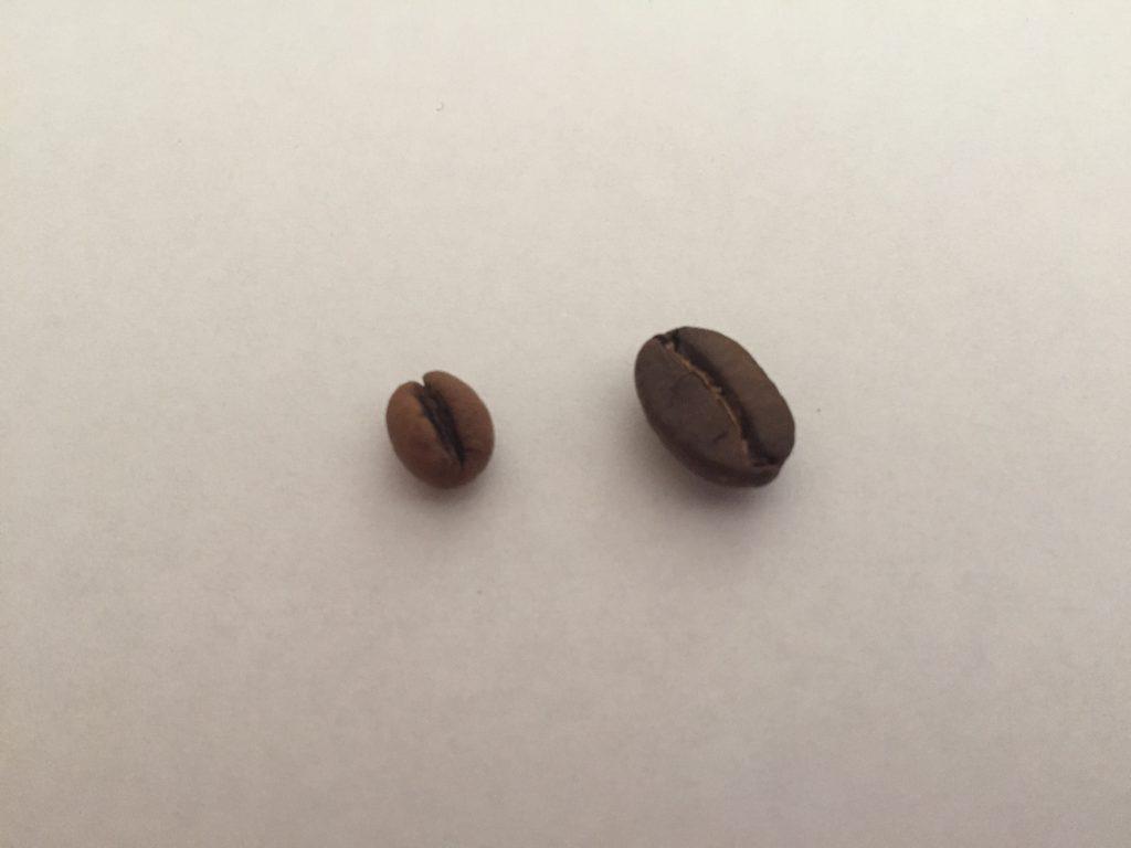 コーヒー豆の形の違い ピーベリー